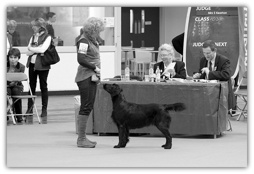 Trade Stands Crufts 2015 : Jolene go with the flow