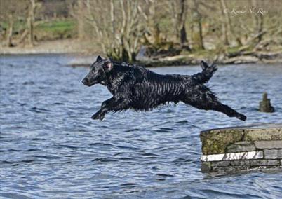 Otis jump water