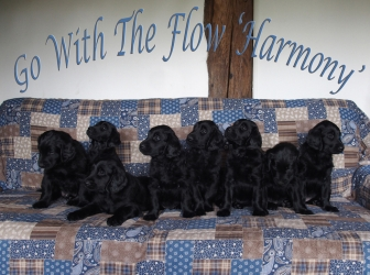 Harmony litter, a word of thanks and…!