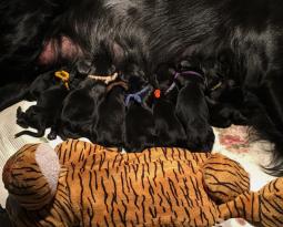 L-Nest geboorte…