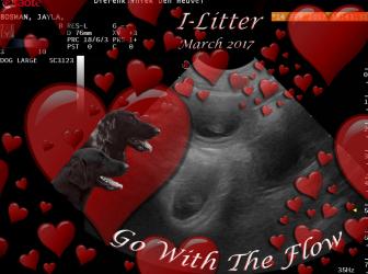 'Valentijnsgedachte'… …Jayla zwanger!