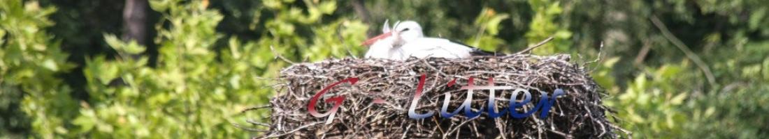Stork has landed… …G – Litter is born!