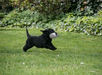 Infinity Nest…puppytest!