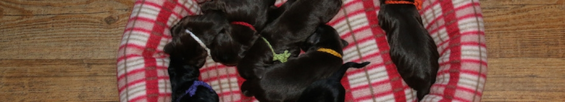 Graceful puppies 1st week…!
